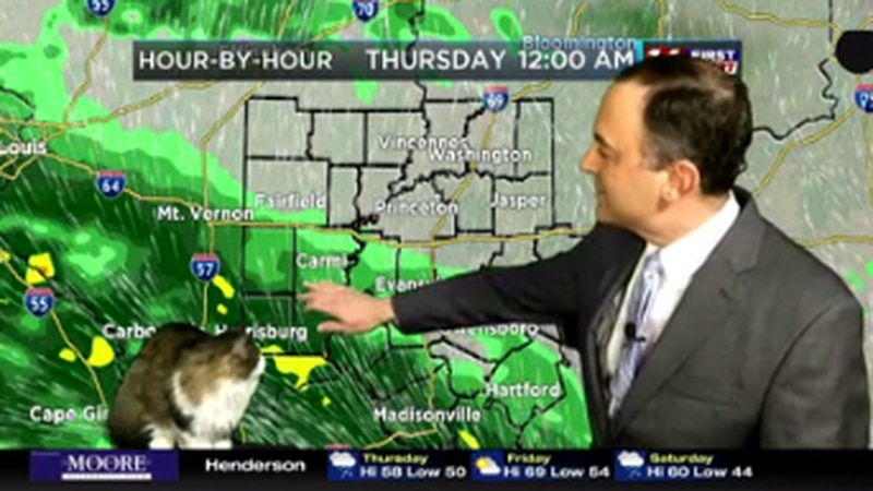 Chief Meteorologist's cat is the purrrfect escape from coronavirus worries