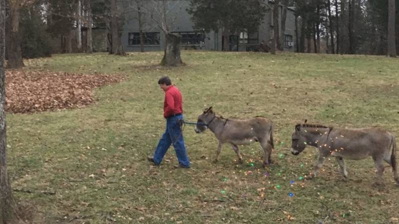 Hody and Guido the donkeys lived with their owners for 20 years.