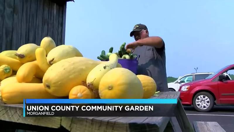 Union Co. couple harvested produce for senior center