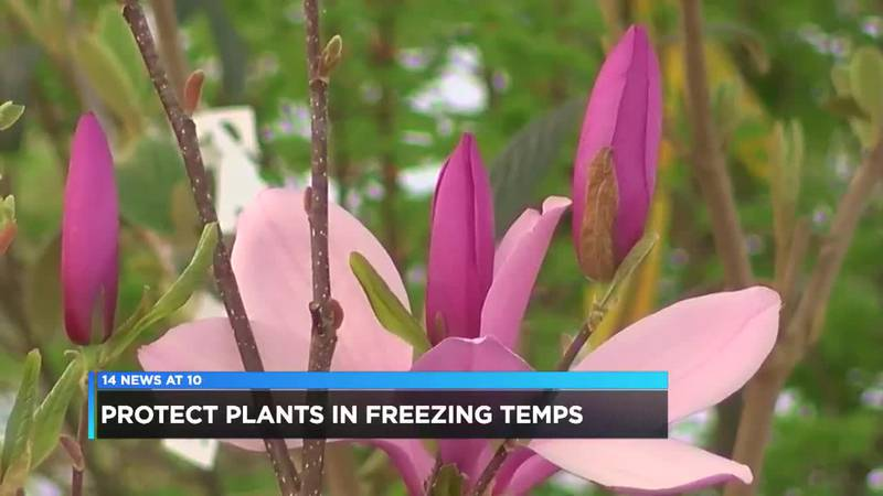 How to protect spring plants in freezing temperatures?
