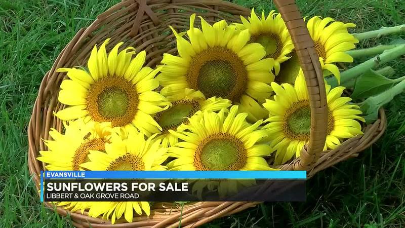 Newburgh business selling sunflowers