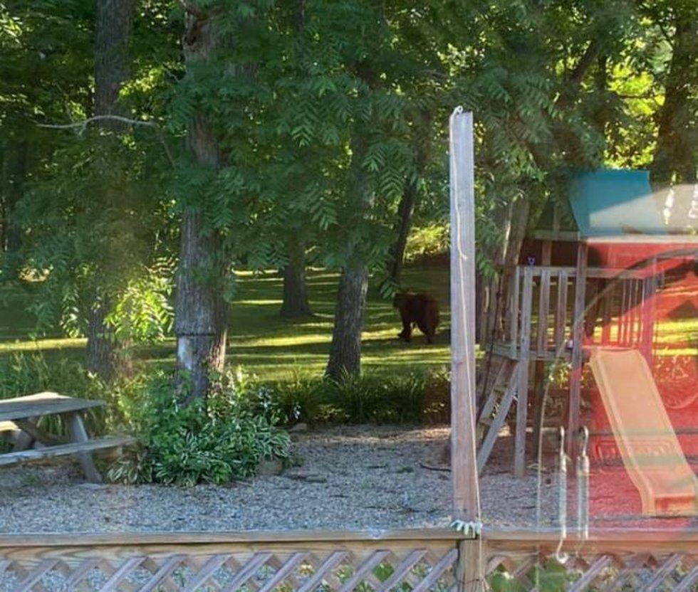 Bear sighting in Centerville, Illinois